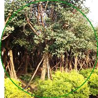 林业有害生物防治
