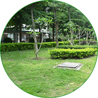绿地养护管理